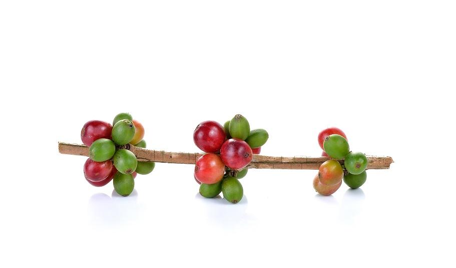 La cosecha del café (I)