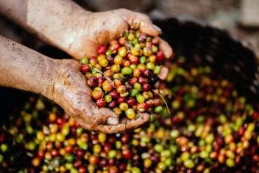 De qué se compone la cafeína